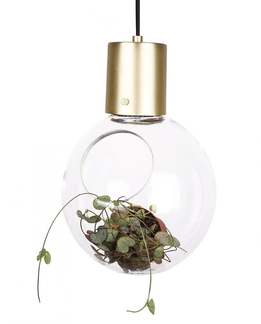 Globen Lighting Mini Hole Klar/Børstet Messing Pendel-67883